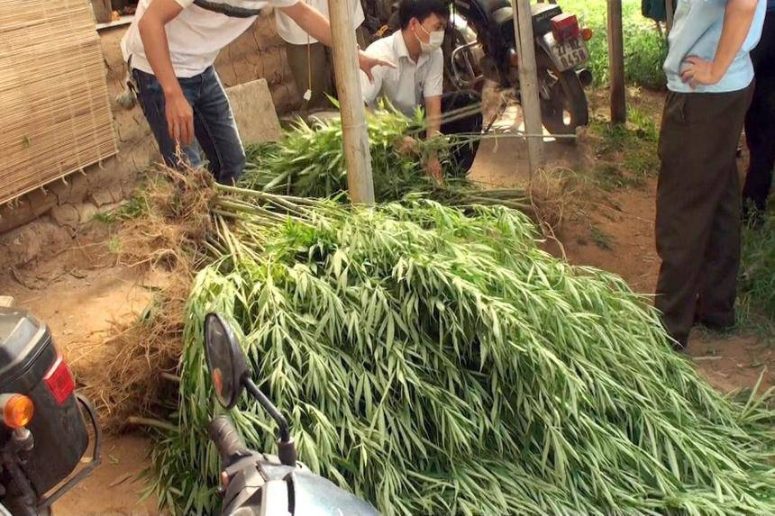 French businessman grows cannabis by Red River