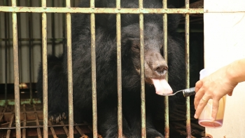 Gia Lai becomes newest bear-farm-free province in Vietnam