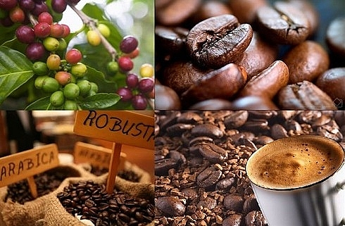 Algerians favor Vietnamese coffee, seafood and many other agricultural products