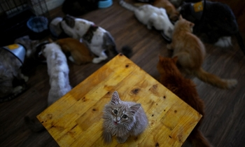 international press highlights small rescue cat cafe in hanoi