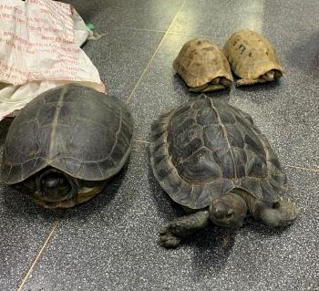 rise in wildlife trafficking arrests shows vietnams determination