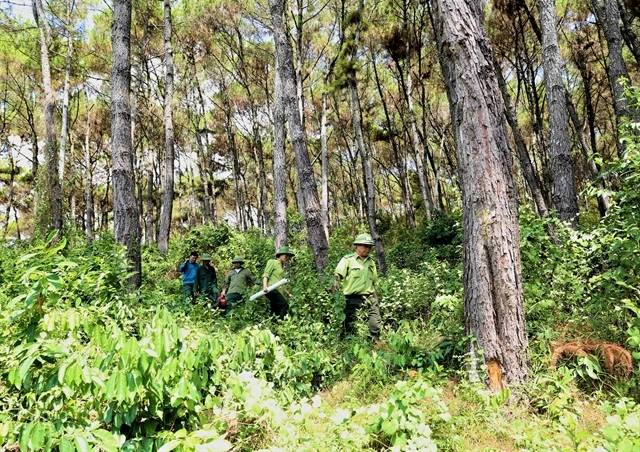 USD51.5 mil agreement supports reducing carbon emissions from deforestation and forest degradation