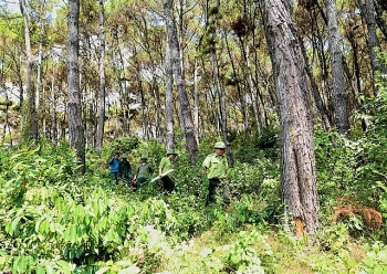 vietnam wb sign usd515 mil deal to cut carbon emissions and reduce deforestation