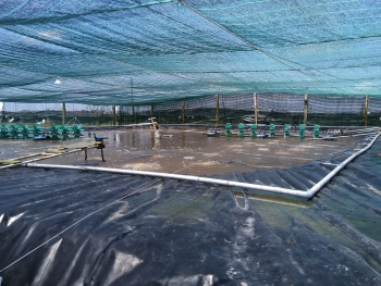 improving vietnams aquaculture production and management in the digital age