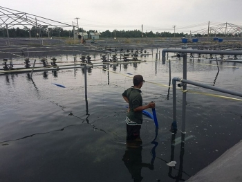 Improving the sustainability and efficiency of aquaculture production in Vietnam