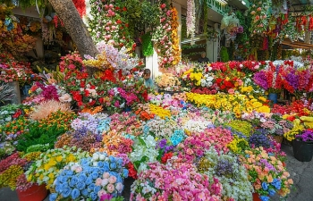 Hanoi to open over 50 spring flower markets for Lunar New Year