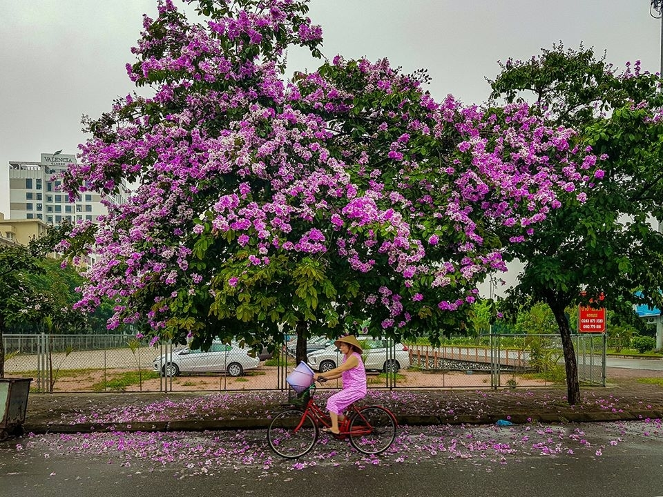 Hanoian's peaceful life on early days of summer