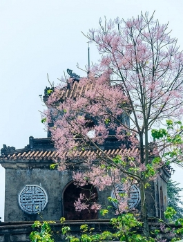 emergence of colourful flowers in hue marks the arrival of summer