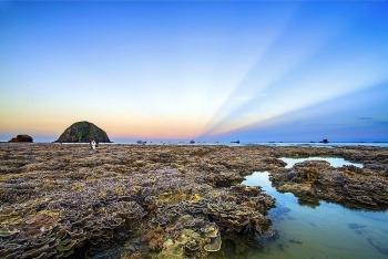 vietnam top destinations stunning coral reefs in hon yen island