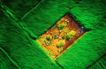 picturesque countryside painting on the rush fields in vinh long