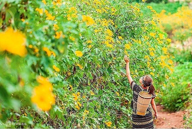 4032 wild sunflower 3