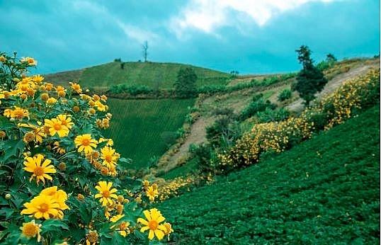 4037 wild sunflower 7