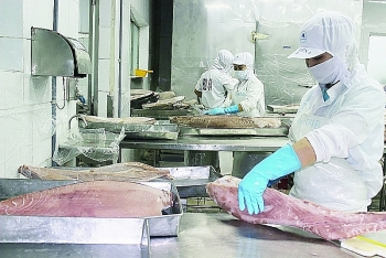 increase in order from eu for vietnamese seafood after evfta