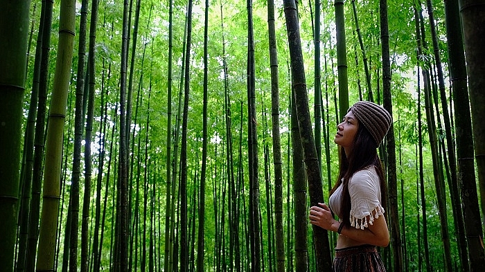 lost in the na hang tua chu bamboo forest in the northwest of vietnam