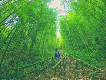 lost in the na hang tua chu bamboo forest northwest of vietnam