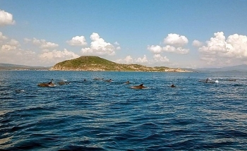 hundreds of dolphins appeared in the central coast of vietnam