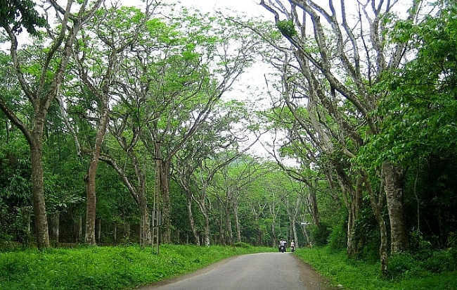 Ma Da forest- a beautiful route for trekking beginners to Southeast of Vietnam
