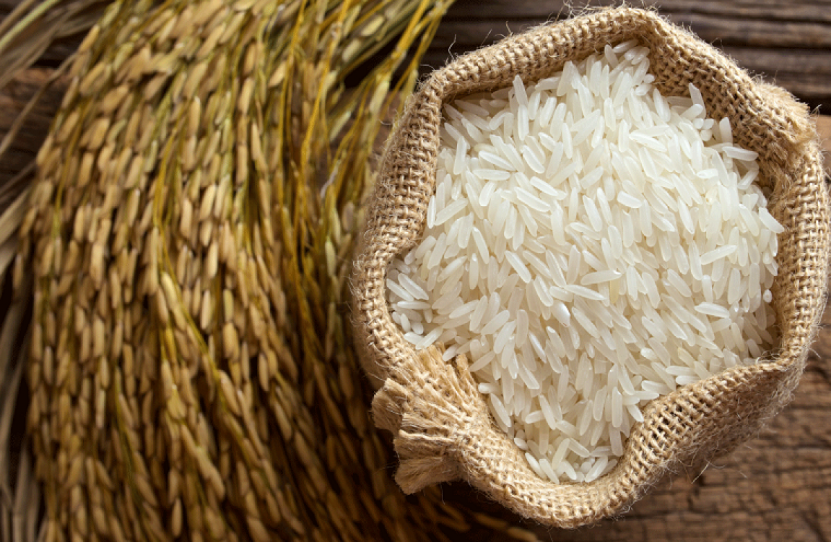 1047 rice