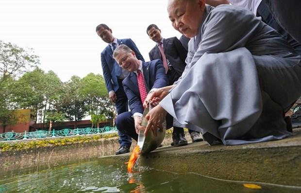 4918 ambassador fish