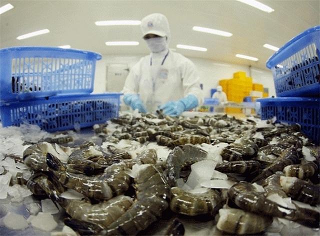 3627 processing shrimp