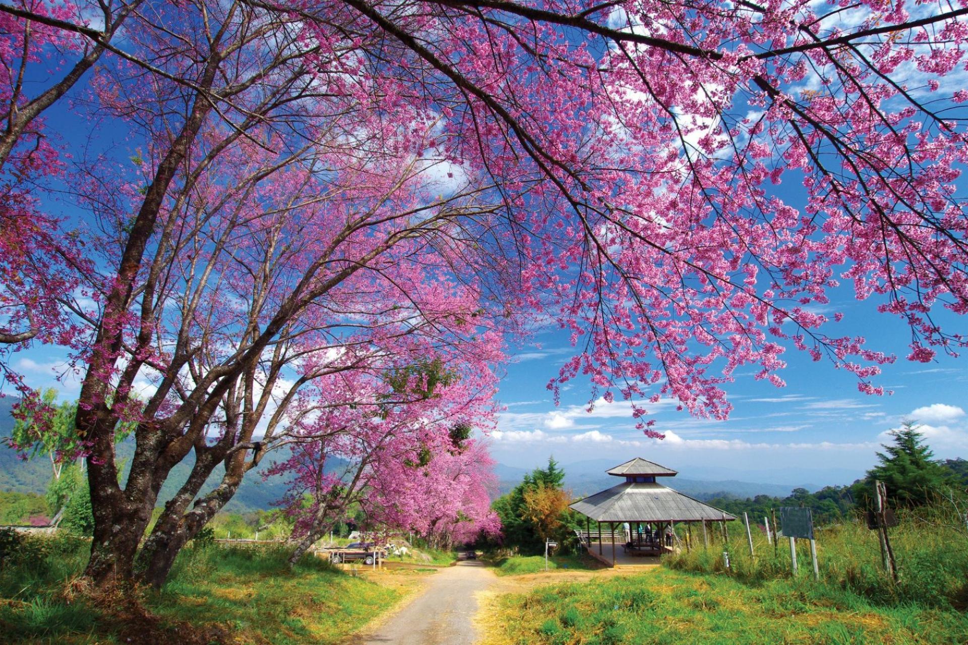 3847-flower-in-thailand