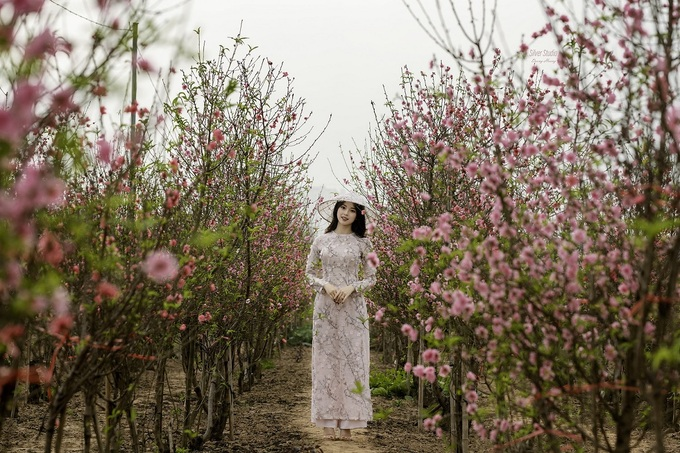 Vietnam among hotspots in Asia to see cherry blossoms