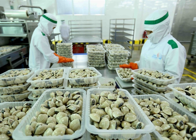 Clam processing at Lenger Seafoods Vietnam Co. Việt Nam and the UK saw impressive growth in their two-way trade though exports faced formidable challenges caused by the COVID-19 pandemic. VNA/VNS Photo