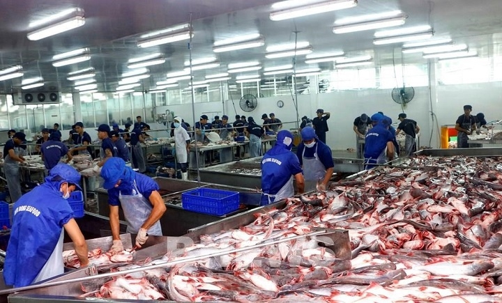 Processing tra fish for exports at Bien Dong Seafood Co., Ltd. in the Mekong Delta city of Can Tho. (Photo: VNA)