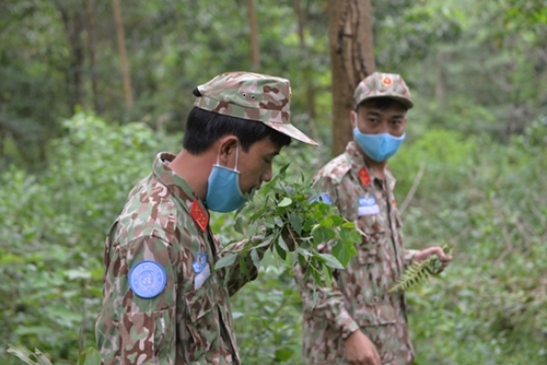 For strange plants, trainees have to smell them to identify whether they are poisonous or not.