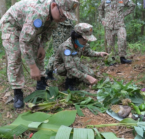 Edible vegetables, tubers and fruits found by trainees