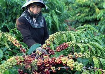Bloomberg: Global Coffee Supply Dealt Fresh Blow by Vietnam's Virus Curbs