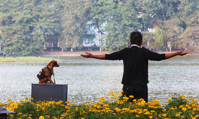 hanoi considering ban on dog walking in public places