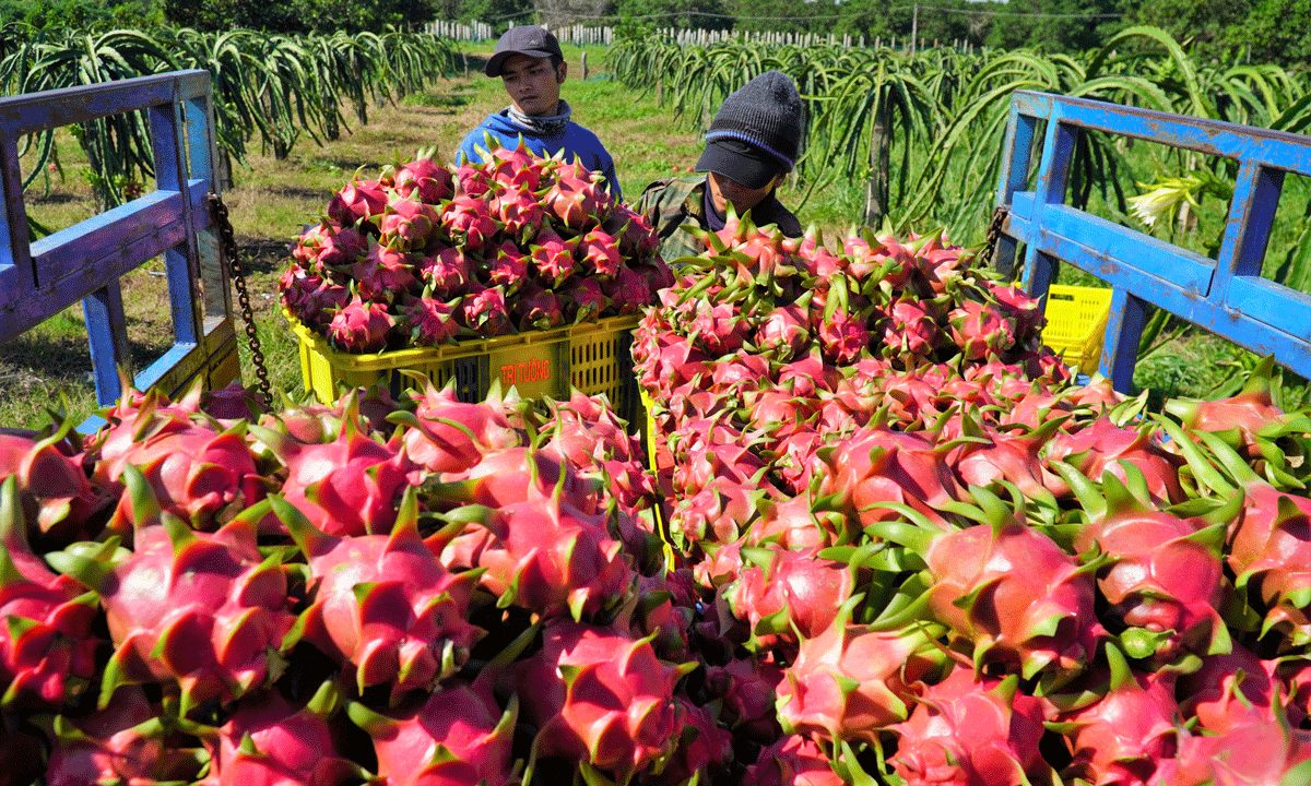 efforts stepped up to resume fruits exports to us