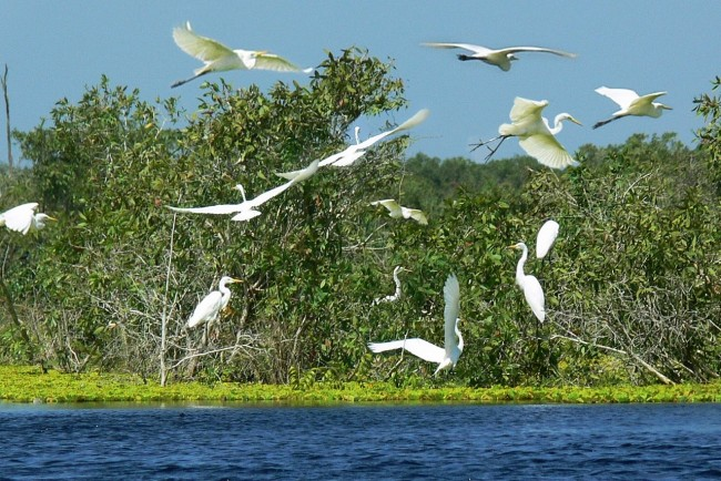 Two More Biosphere Reserves in Vietnam Seek UNESCO Recognition