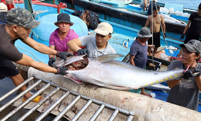 Vietnam Becomes Largest Tuna Supplier to Israel