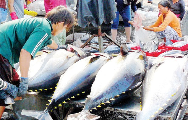 Vietnam's tuna exports to US bounce back quickly