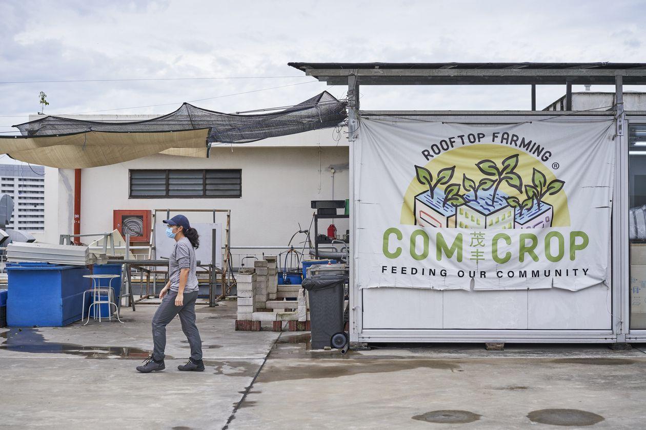 Singapore turns to farming amidst COVID-19