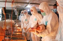 pork price was asked to be reduced by vietnamese ministry