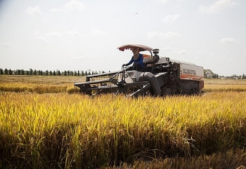 The strong growth of Vietnamese rice export in 2020