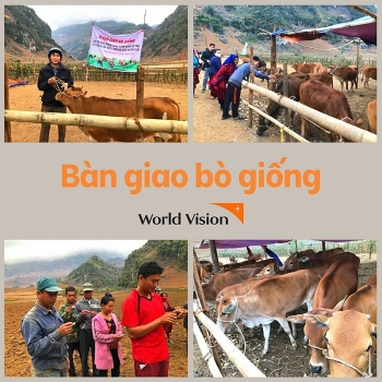 Vietnam World Vision  gave 30 cows to the people of Dien Bien
