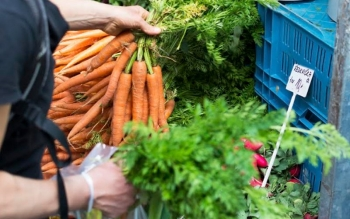 6 tips on grocery shopping during COVID-19 season