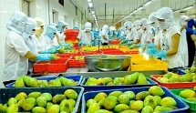 vietnam has 8 groups of goods earning billions of usd of export