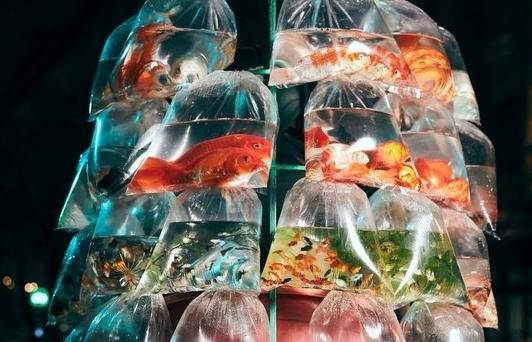 Hanoi street fish seller photo won Smithsonian photography award