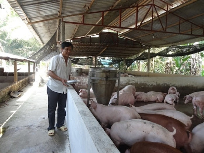 vietnam pork prices climbed high as supply refuses to rise