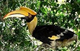 env appeals to eliminate commercial farming of endangered wildlife