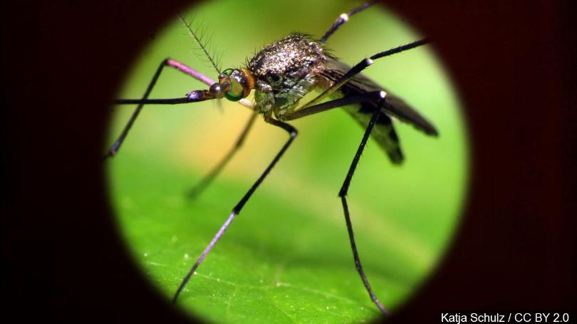 first west nile mosquito found in harris county