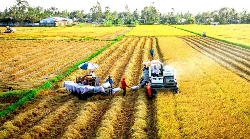 0514 industry and trade rice exporter