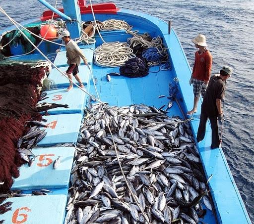 2727 eu yellow card illegal fishing