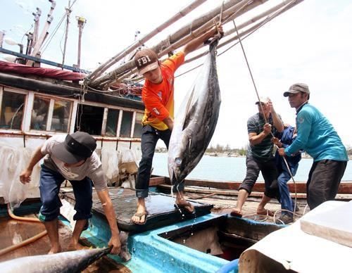 vietnam stressed the goal for eu to remove yellow card over illegal fishing