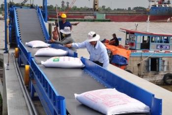vietnams rice export in 6 months reached nearly 35 million tons up 18